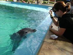 A Happy Dolphin